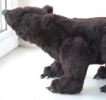 Little Grizzly (Grizlik) bear