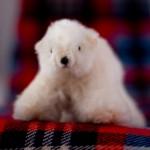 Snowball bear