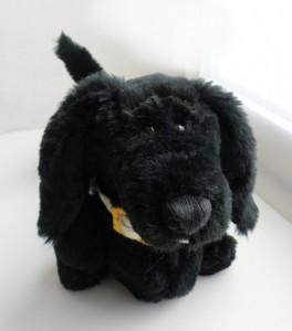 Black dachshund dog.