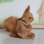 Little_Squirrel by Mint-Bird (Alena Tauseneva)